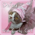 Daisy the Curly Cat : Welcome to my Curly World