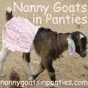 Nanny Goats in Panties - 27