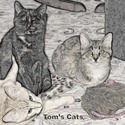 Tom's Cats